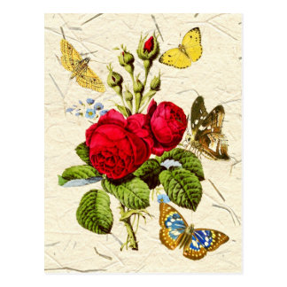 Red Moss Rose with colorful butterflies Post Cards