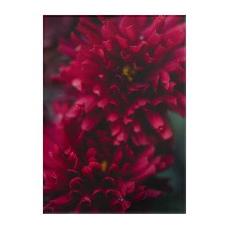 Red Mums Acrylic Print