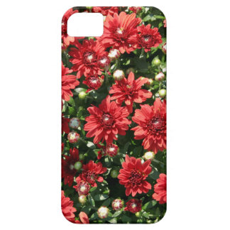 Red Mums iPhone 5 Cover