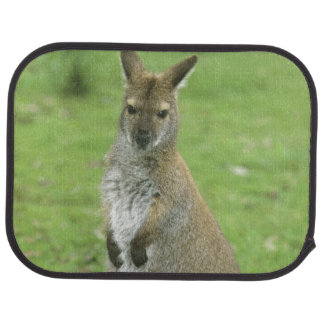 Red-necked Wallaby, Macropus rufogriseus), Car Mat