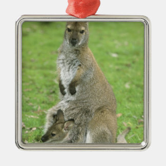 Red-necked Wallaby, Macropus rufogriseus), Christmas Ornament
