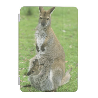 Red-necked Wallaby, Macropus rufogriseus), iPad Mini Cover