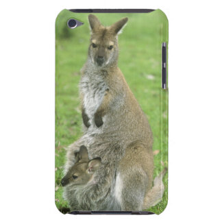 Red-necked Wallaby, Macropus rufogriseus), iPod Case-Mate Case