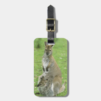 Red-necked Wallaby, Macropus rufogriseus), Luggage Tag