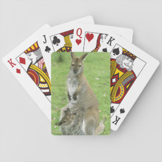 Red-necked Wallaby, Macropus rufogriseus), Playing Cards