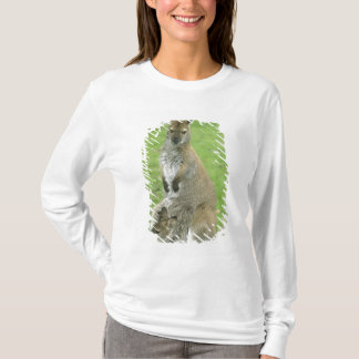 Red-necked Wallaby, Macropus rufogriseus), T-Shirt