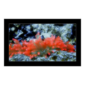 Red Neon Anemone with beautifier filter effect Poster