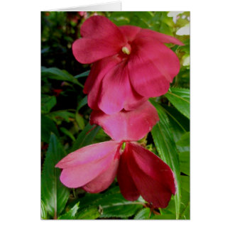 Red New Guinea Impatiens Note Card