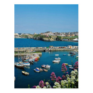 Red Newquay harbor, Cornwall, U.K. flowers Postcard
