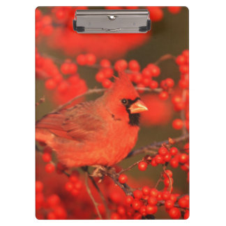 Red Northern Cardinal Male, IL Clipboard