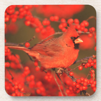 Red Northern Cardinal Male, IL Coaster