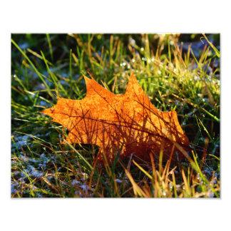 Red Oak Tree Leaf Photograph