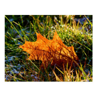 Red Oak Tree Leaf Postcard