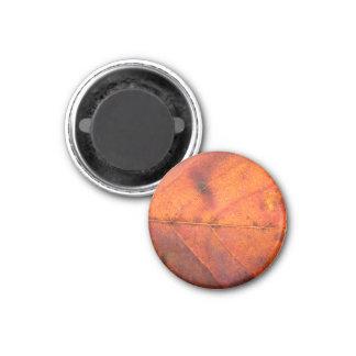 Red-Orange Autumn Leaf Magnet