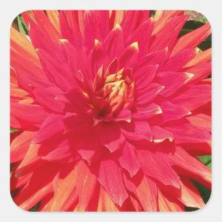 Red Orange Dahlia Flower Square Sticker