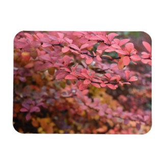Red Orange Fall Foliage Autumn Leaves Nature Photo Magnet