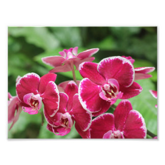 Red Orchid blossom Photo Print