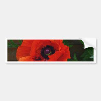 Red Oriental Poppy Bumper Sticker