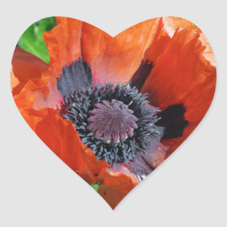 Red Oriental Poppy decorative stickers