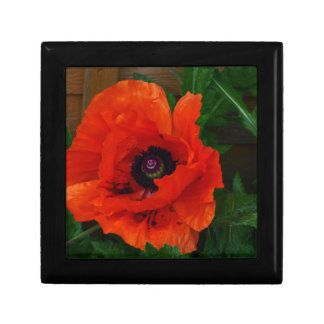 Red Oriental Poppy Small Square Gift Box