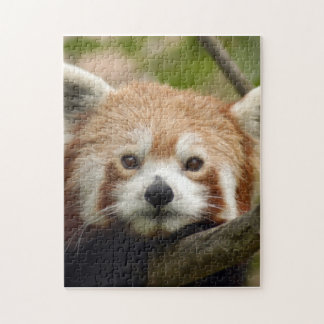 red-panda-010 jigsaw puzzle