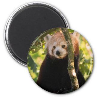 Red panda 6 cm round magnet