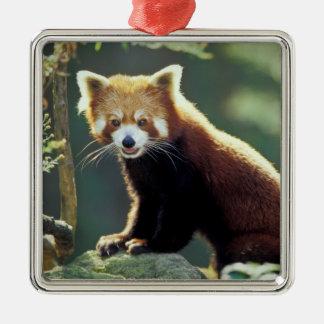 Red Panda Ailurus fulgens) Christmas Ornament