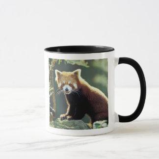 Red Panda Ailurus fulgens) Mug