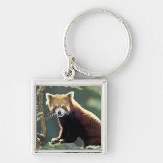 Red Panda Ailurus fulgens) Silver-Colored Square Key Ring