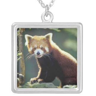 Red Panda Ailurus fulgens) Silver Plated Necklace