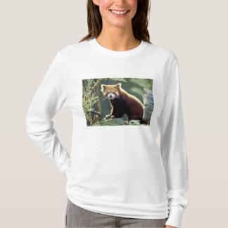 Red Panda Ailurus fulgens) T-Shirt