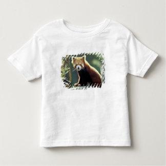 Red Panda Ailurus fulgens) Toddler T-Shirt