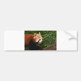 Red Panda Bumper Sticker