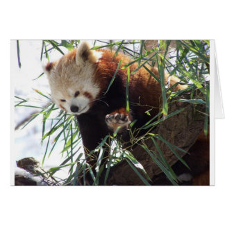 Red Panda Cards