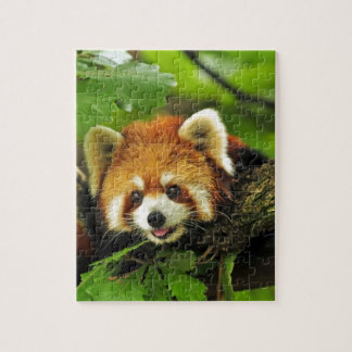 Red Panda Cub Jigsaw Puzzle
