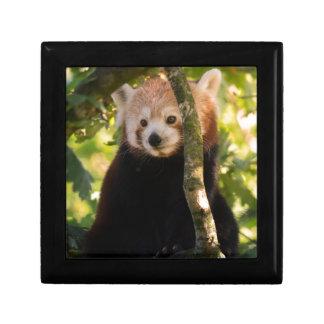 Red panda gift box
