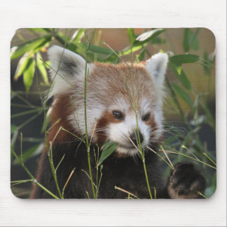 Red Panda in the Grass Mouse Pad