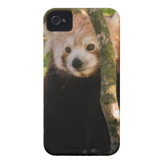 Red panda iPhone 4 covers