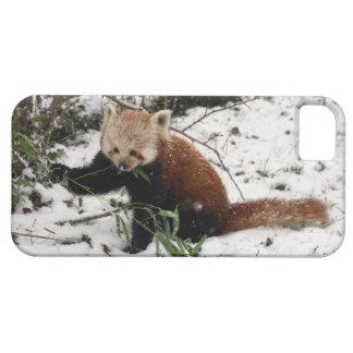 Red Panda iPhone 5 Case