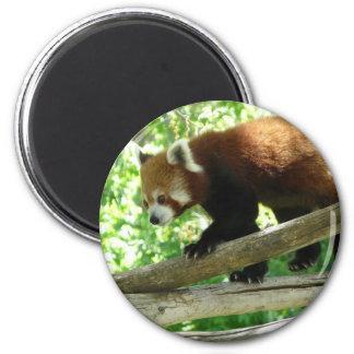 red panda magnet