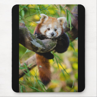 Red Panda Mouse Mat