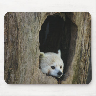 Red Panda Mouse Pads