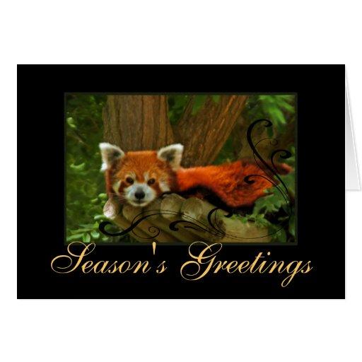 Red Panda Nature Seasons Greetings Holiday Card