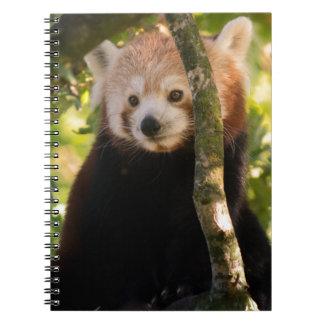 Red panda notebook