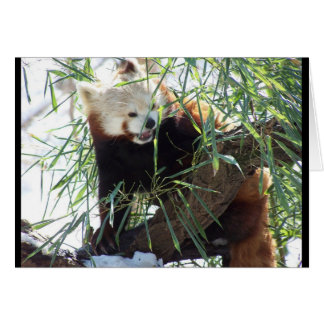 Red Panda Open Mouth Greeting Card