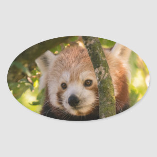 Red panda oval sticker