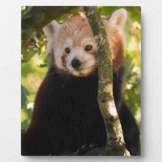 Red panda photo plaque