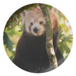 Red panda plate