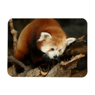 Red Panda Flexible Magnets