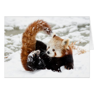 Red Panda Snow Card
